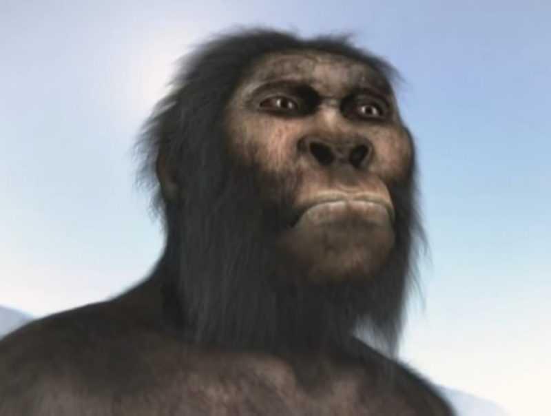 Человек: классификация видов, строение и характерные признаки развития