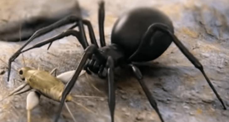 паук и насекомое