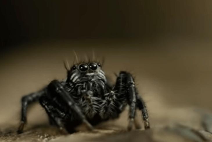 из паука