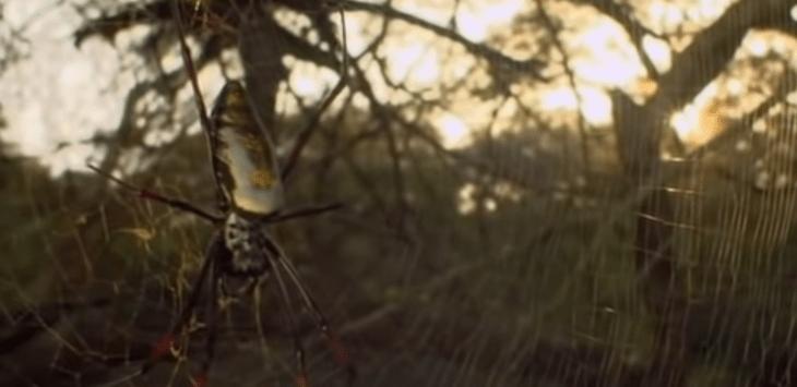 почему паук съедает паутину