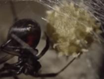 Удивительные факты о пауках и паутине