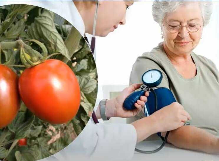 Чем полезны помидоры? Они излечивают или вредят?