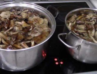 сколько варить грибы перед заморозкой