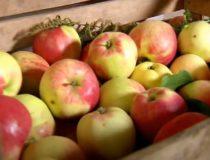Осенние фрукты - вкусные и полезные дары природы