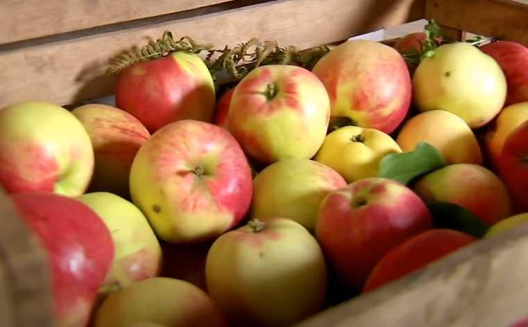 Осенние фрукты – вкусные и полезные дары природы