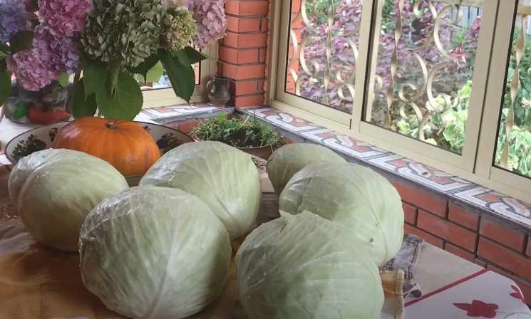 Осенние фрукты и овощи