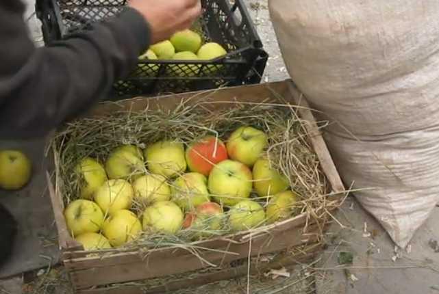 Осенние фрукты яблоки
