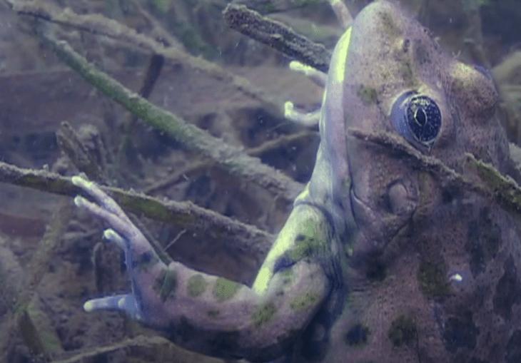 зимовка лягушки