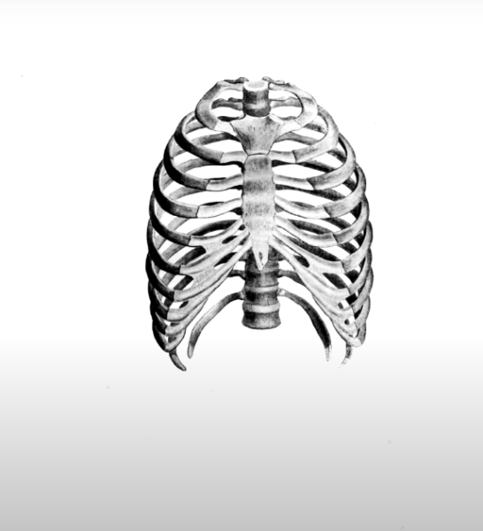 ребро Люшка на скелете