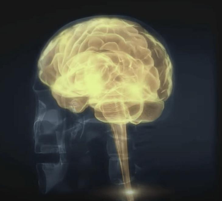 использование клеток мозга
