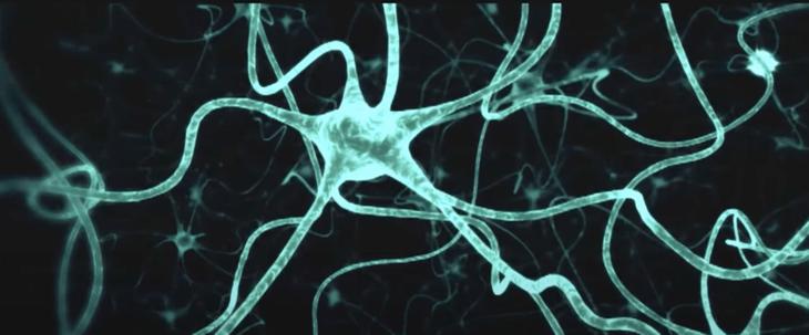 мысли рождаются в нейронах мозга