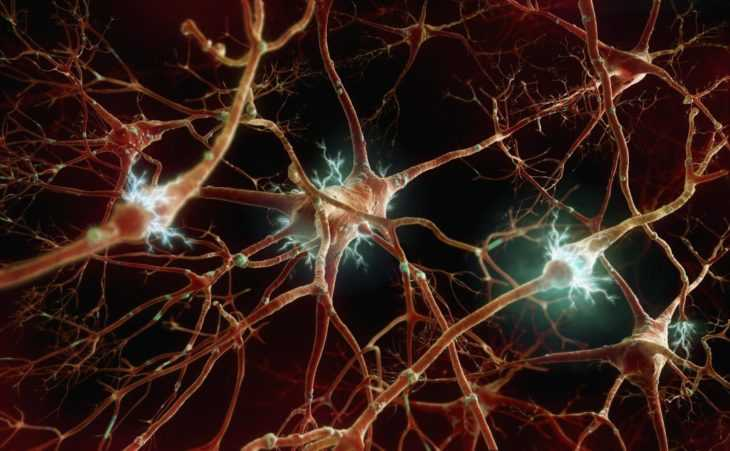 Почему гибнут клетки мозга