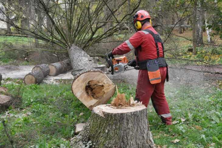 услуги спила деревьев