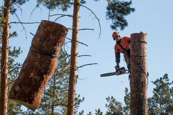 Преимущества заказа услуги спила деревьев