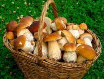 Чем полезны грибы для организма человека?